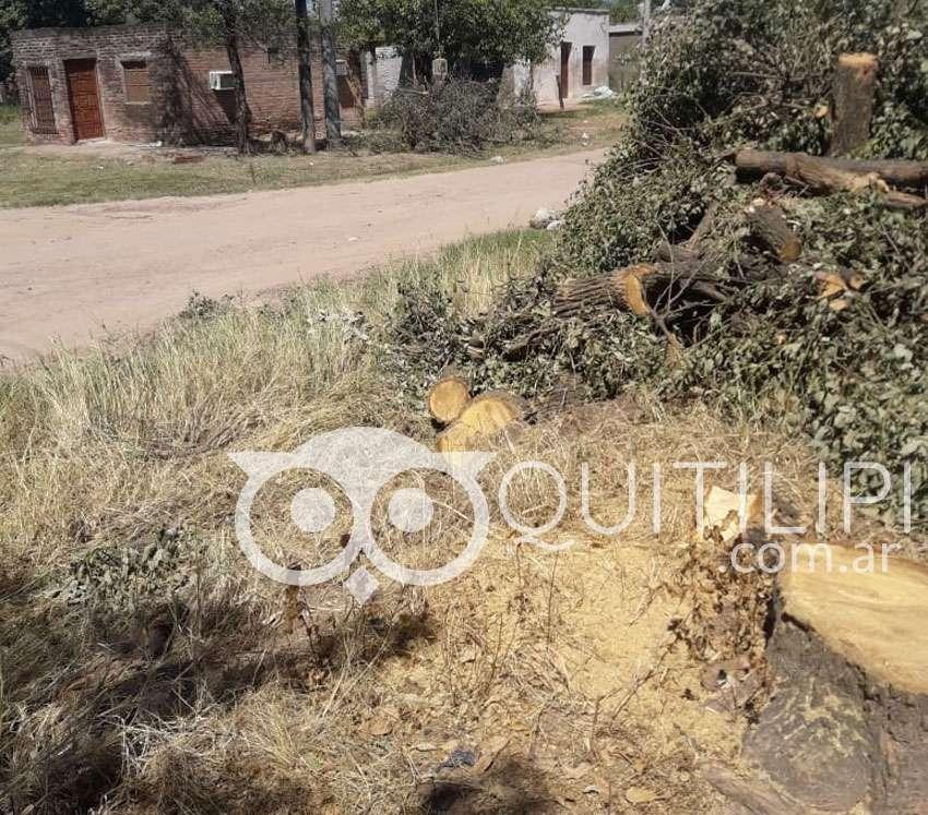 Vecinos de la Chaco embravecidos por el corte de árboles que realizó la Municipalidad en la vía pública 5
