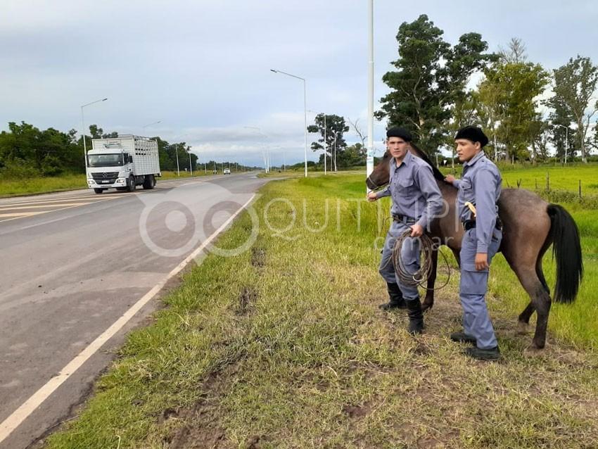 La División Rural Secuestró dos equinos sueltos en la vía pública 9