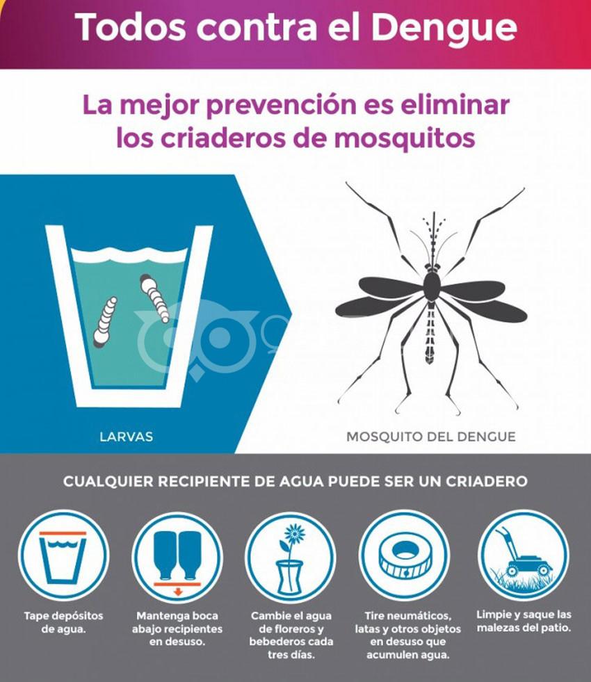Fuerte intervención contra el Dengue 6