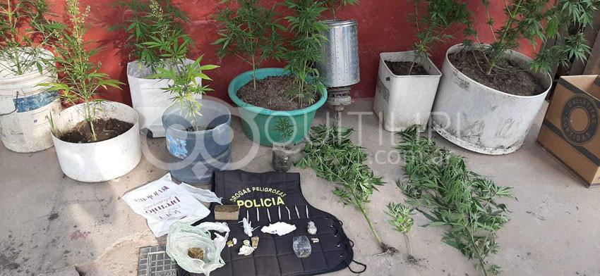 Operativo Antidroga. Secuestran 14 plantas y 154 gramos de Cannabis Sativa 8