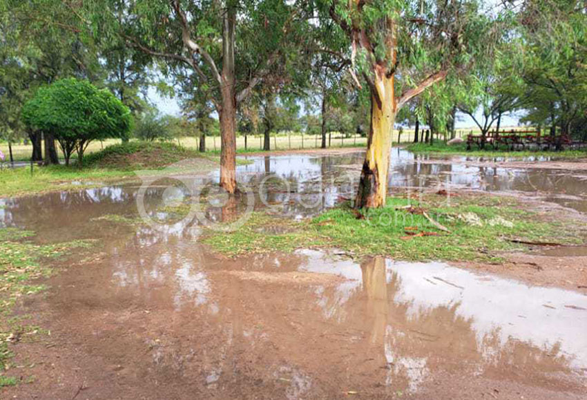 Fuerte temporal de lluvia y viento, provoca la caída de árboles 21
