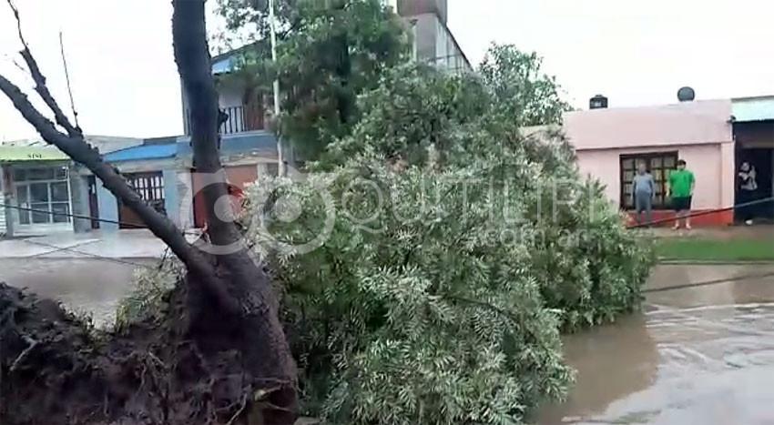 Temporal causó la caída de árboles en el casco céntrico y barrios 11